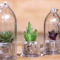 Plantochi Spike - élő kaktusz kulcstartó