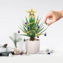 Mini karácsonyi növény díszek