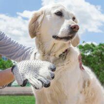 Kisállat kefe és masszázskesztyű (kutyához és macskához)