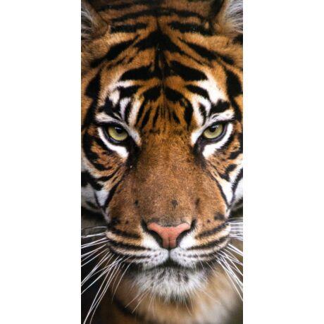 Tigris fürdőlepedő